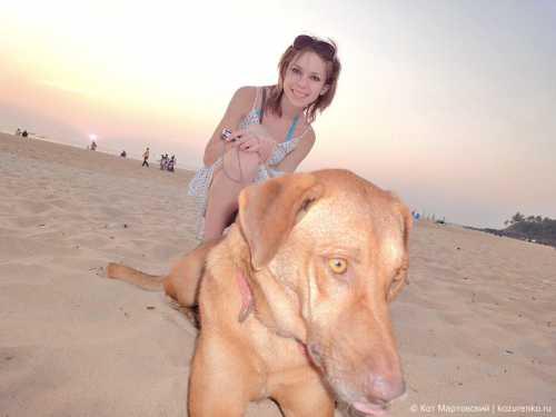 собаки для аллергиков